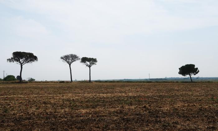 campi aridi del tavoliere