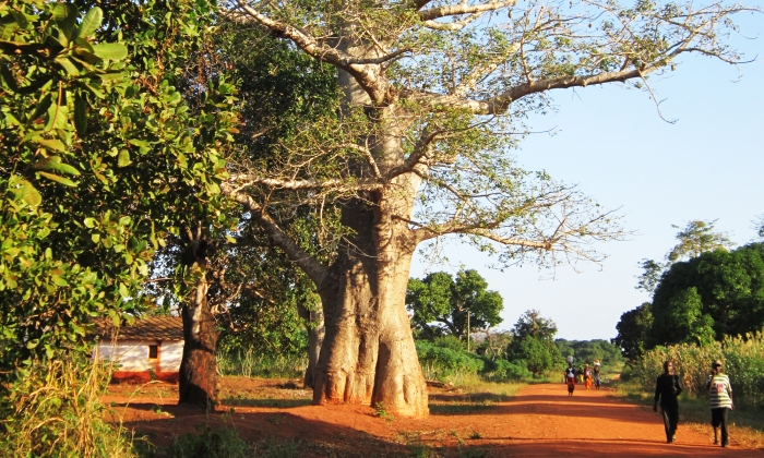 baobab e strade mozambicane