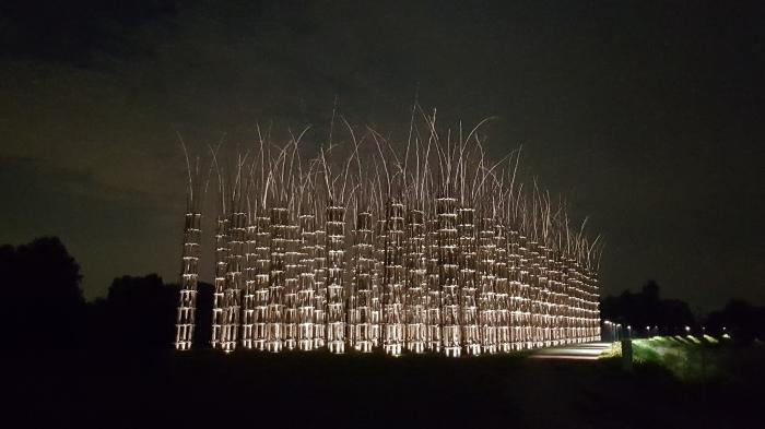lodi cattedrale vegetale giuliano mauri notte